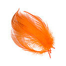flanc de canard orange