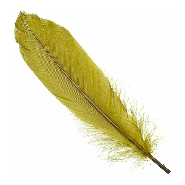 plume d'oie olive